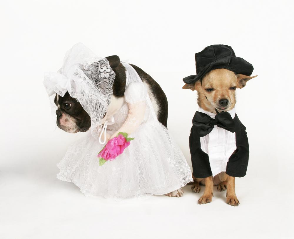 tổ chức đám cưới cho thú cưng