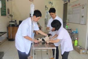 Bác sĩ thú y - Nghề cơ cơ hội việc làm caocủa ngành y tế